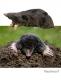 Taupe, escargot et cie