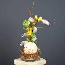 Oeuf d'autruche nature soufflé décoration vide