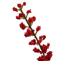 Buisson d'astilbe rouge 52 cm