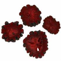 Tranches décoratives de fruits d'attier, rouge 1 kg