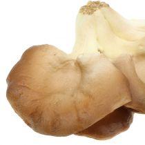 Champignons d'huîtres décoratifs marrons 12cm x 19cm