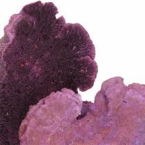Eponge d'arbre violet lavé blanc 1kg