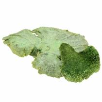 Eponge d'arbre verte lavée à la chaux 1kg