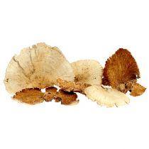 Eponge d'arbre blanchie 1kg