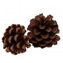 Pommes de pin de montagne petites naturelles 1kg