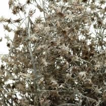Branche de fleur sauvage séchée fleurie blanchie à la chaux 60cm 100g