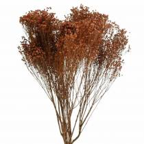 Fleurs séchées Balai Bloom Marron 170g