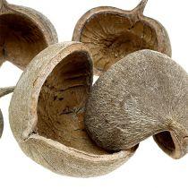 Noix de bouddha 8-10 cm blanchies 10 p.