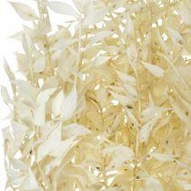 Lot de brindilles de Ruscus séchées blanchies Ruscus 4-6 pièces