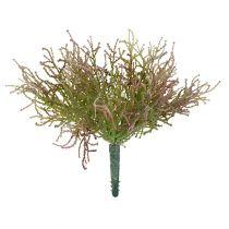Calocéphale rose/vert 21,5cm