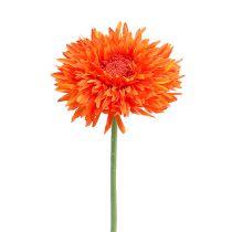 Chrysanthème Teddy 63 cm orange