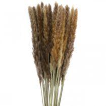 Herbe sèche herbe des pampas en grappe naturelle 80cm