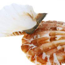 Coquille décorative blanche, rouge Véritable coquillage dans un filet de raphia Décoration de table 400g