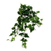 Chute de lierre blanc-vert 70 cm