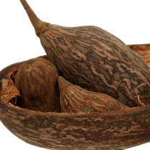 Mélange de fruits de baobab avec coque 300 g
