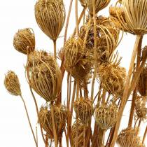 Fleurs séchées de fenouil naturel 100g