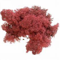 Deko-Mos Rot mousse de renne de Bordeaux pour la décoration et l'artisanat 500g