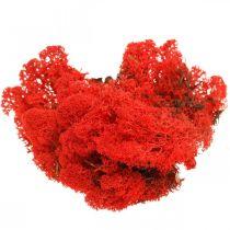 Mousse décorative mousse de renne rouge pour artisanat 400g