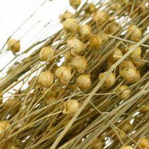 Graminées naturelles de lin pour fleuristerie sèche 100g