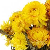 Bouquet de décoration fleurs séchées jaune fleur de paille 75g