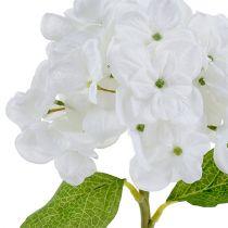 Hortensia blanc 35 cm