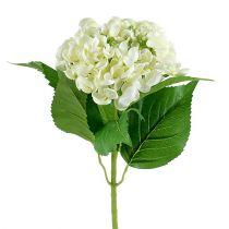 Hortensia 60 cm blanc