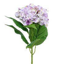 Hortensia blanc mauve 60 cm