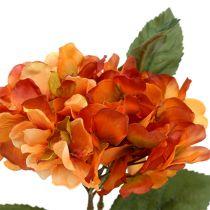 Hortensia orange 30 cm 3 p.