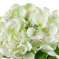 Hortensia blanc vert 60 cm