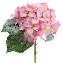 Hortensia rose avec effet de neige 25cm