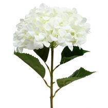Hortensia géant blanc Ø 30 cm L. 113 cm