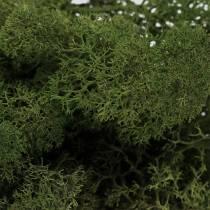 Mousse de mousse de renne vert 500g
