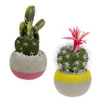 Cactus en pot mix H13cm 4pcs