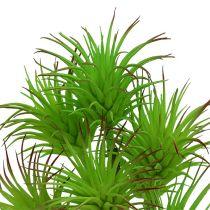 Branches de cactée 20cm Vert clair 3P