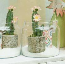 Cactus dans un pot avec fleur 21cm blanc
