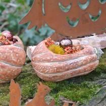 Citrouille à planter Orange 28 × 15 × 14cm
