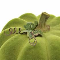 Potiron décoratif floqué vert mousse 32cm