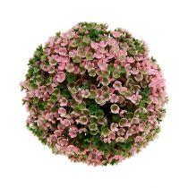 Plante boule rose-vert Ø18cm 1p
