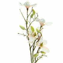 Magnolia pêche 85cm