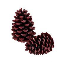 Cônes de pin maritime rouges 10-15 cm 12 p.