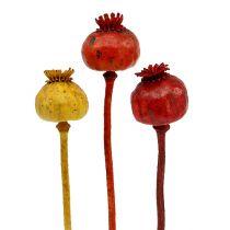 Têtes de pavot assorties 3 couleurs 100pcs
