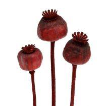 Têtes de pavot teintes en rouge 100p