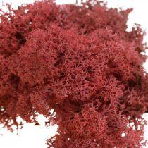 Mousse décorative pour l'artisanat Mousse naturelle rouge colorée en sachet de 40g