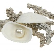 Assortiment de coquillages avec perle et bois blanc 200 g