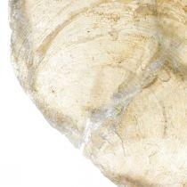 Décorations de plage, coquillages Capiz 5–10cm, objets naturels, nacre, maritime 1kg