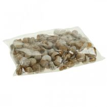 Escargot décoration coquilles d'escargot nature terre escargot vide 200g