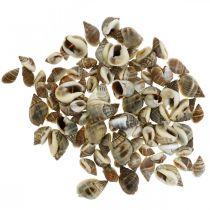 Décor naturel, coquilles d'escargot naturelles 1–2cm, décoration coquille 1kg