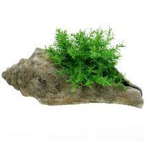 Coquille pour planter L40cm