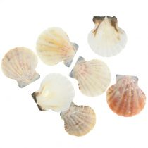 Shell Mix Natural 3cm - 5cm 250g