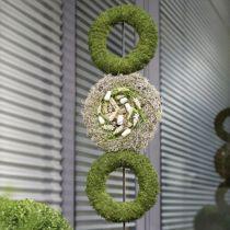Couronne d'anneau mousse florale gris H3cm Ø20cm 6pcs